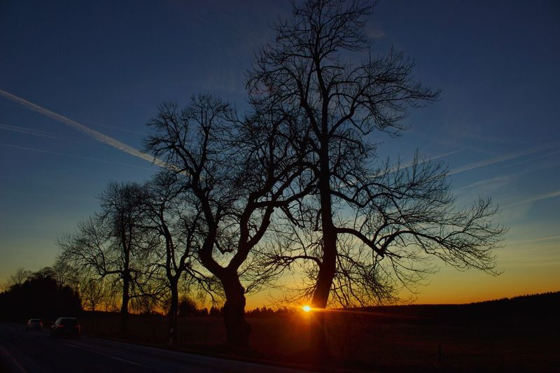 Sunset in Clausthal. Tree Sky Silhouette Sunset Bare Tree Nature Beauty In Nature Tranquil Scene Sun No People Outdoors Tranquility Scenics Branch First Eyeem Photo FirstEyeEm