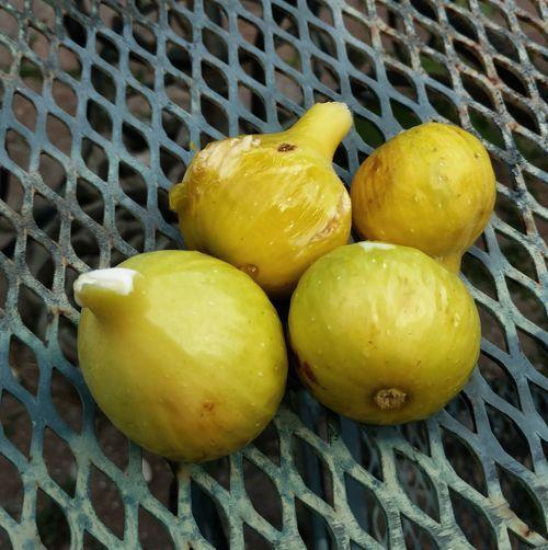 Figs Fresh On Eyeem  Justcut Sweetfruit Summertime Yellowfigs Yummy Natureissweet
