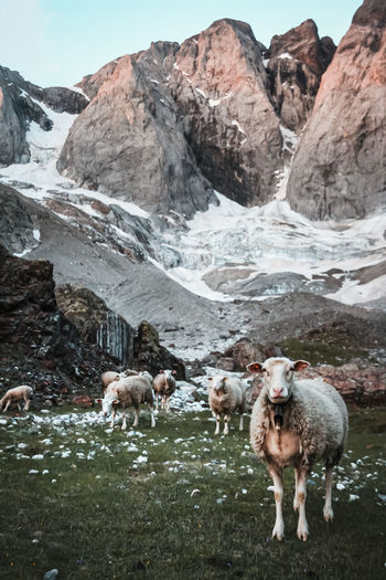 View of sheep on mountain