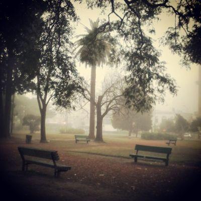 Hoy dia de Niebla 9 am Baciudad Baires Argentina Argentinaingram Streetstyles_gf Plazas Frio Invierno