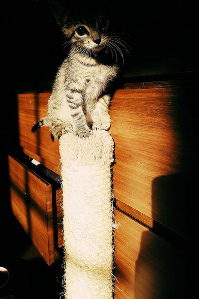Indoors  Shadow Cat♡ Pet Portraits