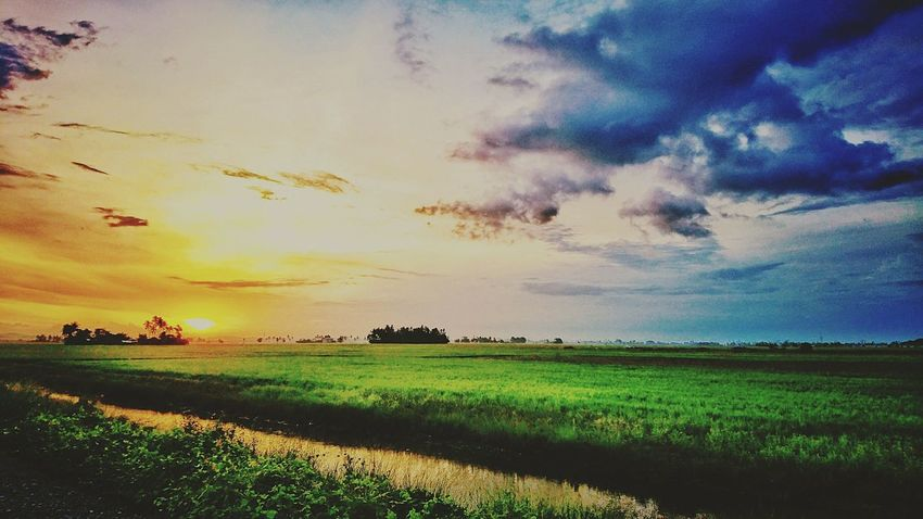 Field Sunset No People Multi Colored At Alor Setar Malaysia Sony Xperia Z5 Rice Paddy Field Agriculture