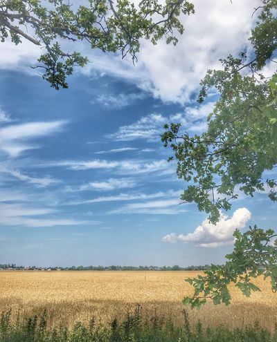 Sunny field Sky Plant Cloud - Sky Tree Growth Tranquility Beauty In Nature Land Tranquil Scene Field Landscape Nature No People Agriculture Green Color Day Outdoors Scenics - Nature The Great Outdoors - 2018 EyeEm Awards