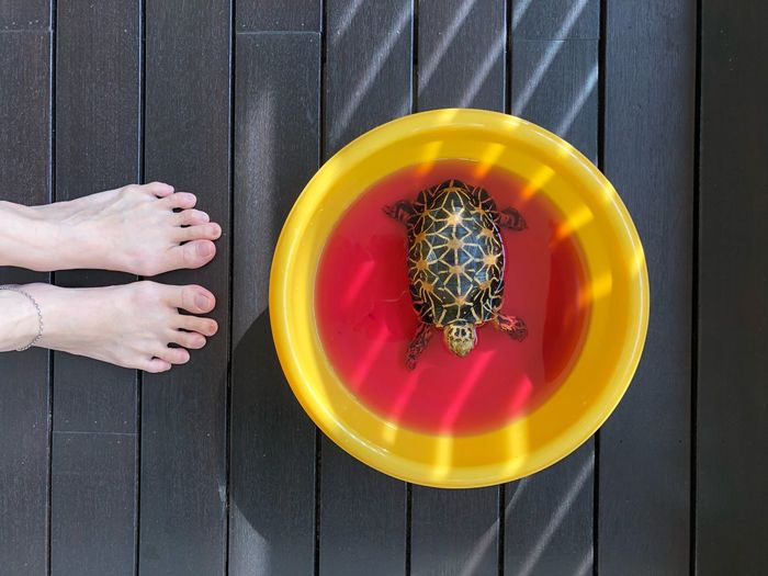 Spa time Spa Treatment Tortoise EyeEm Selects Directly Above Body Part Hand High Angle View Lifestyles