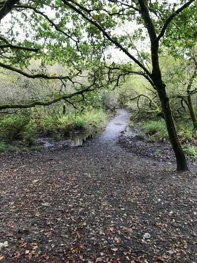 October walk Autumn Is Definitely Here Leaves Tree Nature Beauty In Nature Growth Scenics The Way Forward Outdoors Forest Branch Autumn Landscape Shapes In Nature  Wood Walking Route Cornwall Uk A Stroll With Loved Ones And Dogs Leaves On The Ground In The Woods Leading The Way