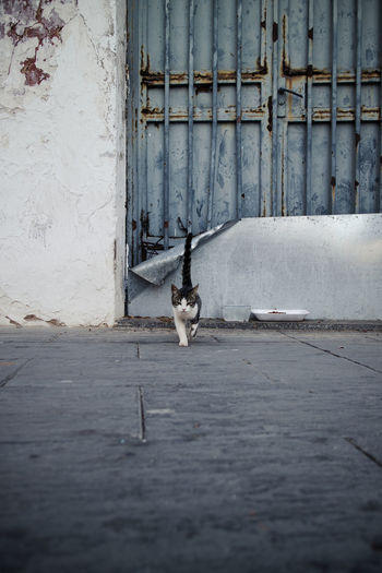 View of a dog on wall