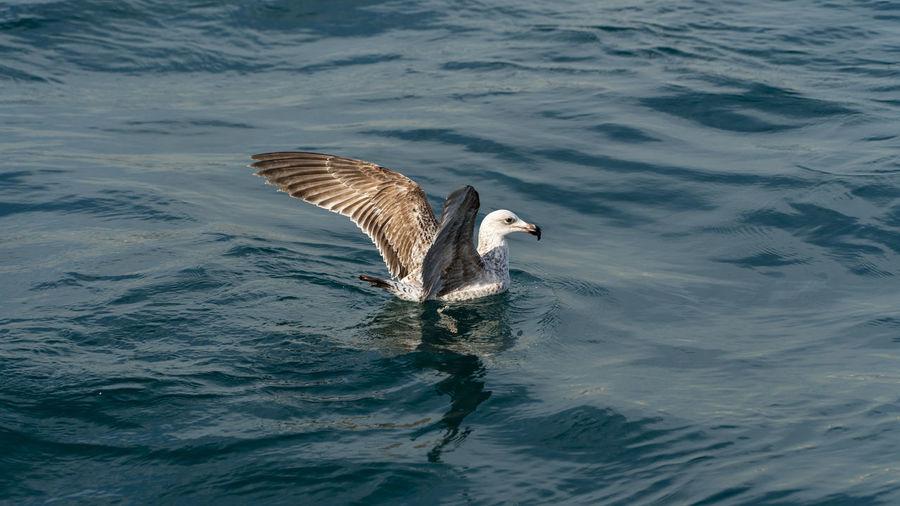 Seagull sit on