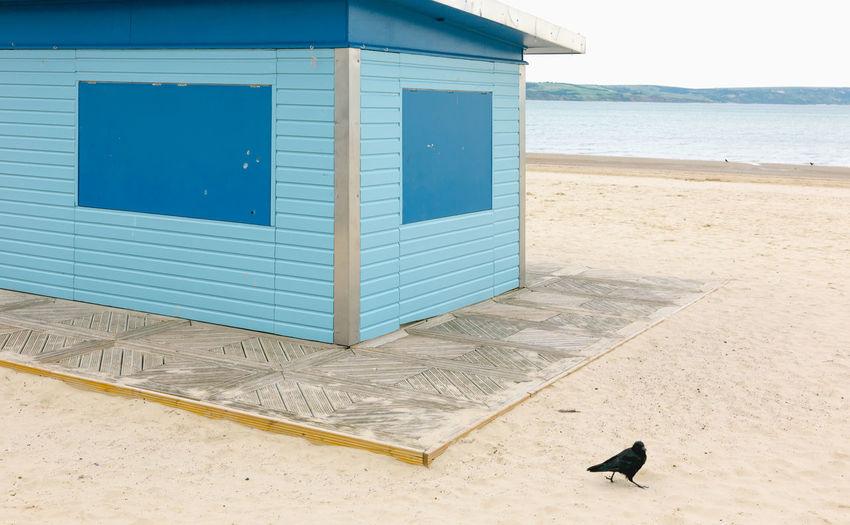 Bird on beach against blue sky