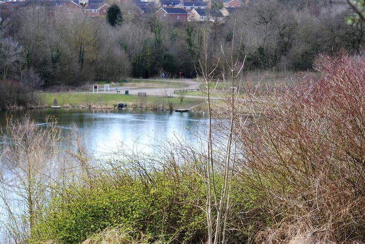 Nature Beautiful Lake Scenery Town Peaceful Lakeside Tree Water Spraying Sky Grass Plant Calm Watering