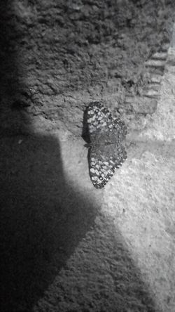 Notfilter Blackandwhite Nightphotography Night Butterfly Nature Wall Beautiful Water Full Frame Nature Day Outdoors Sea Tranquility Footpath Wave Pattern Journey