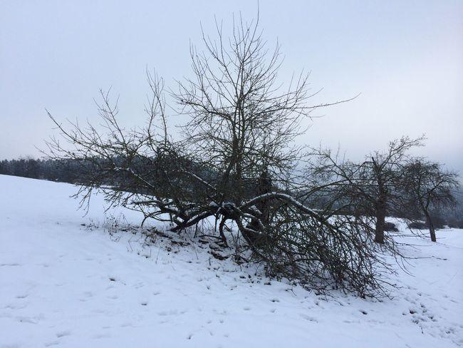 Landscape Winter Snow EyeEm Nature Lover The Purist (no Edit, No Filter) Blackforest Walking Around Trees Schwarzwald Photogra-tree