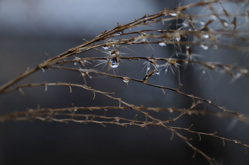 Close-up of dry twig on branch