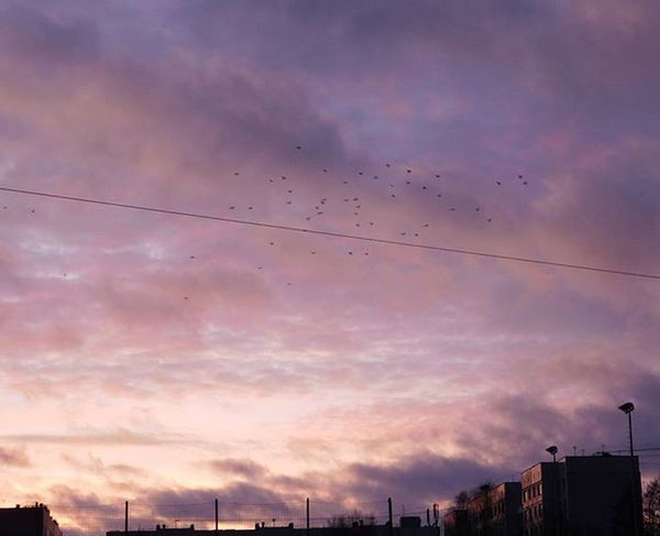 Saulriets Sunset Putni Birds Saulriets🌞 Sunsets Sunrise_sunsets_aroundworld Sunset_madness Sunset_pics Debesis Sky Skyphotography Mākoņi Clouds Riga Riga Rigaphotos Latvija Latvia Latvijasdaba рига Imanta Showcase:January