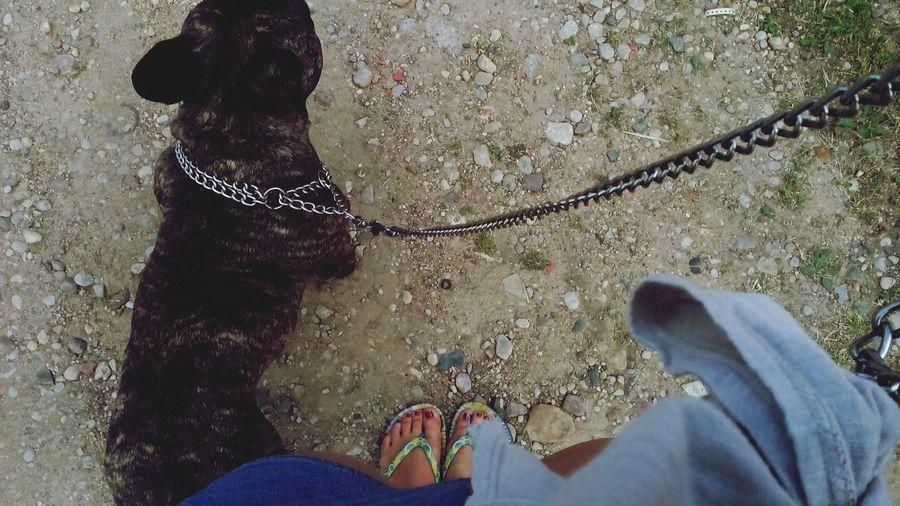 Went for a walk with my doggy Dog Like4like Summer ☀ Enjoying Life