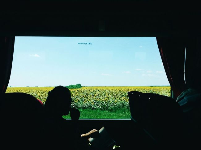 The Journey Is The Destination Traveling By Bus✌ Sunflowers🌻 Sunflower Field Woman Sillouette Reading A Book Bus Negative Space Eyem Best Shots Exit Magic 2016 Minimalism Negativespace Colour Of Life