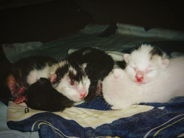 Hi! Enjoying Life Hello World Kitties Newborn sleeping