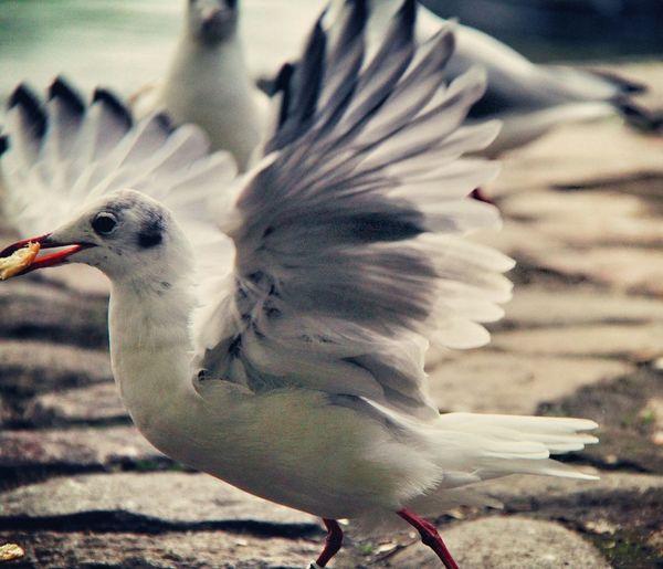 Diebesgut💙🐦😁 Möwenleckerbissen Hamburg Möwe Followme Norddeutschland Taking Photos Seagulls Bird Photography Photography Birds