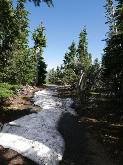 Hiking Forest Hiking Trip Hurricane Hill Landscape Nature Outdoors Snow In Summer The Way Forward Tree