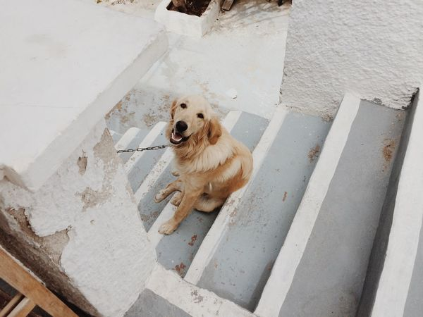Just friendly dog on Santorini, Greece Dog Friends Animals Nature Traveling Cute Pets Santorini Greece Санторини
