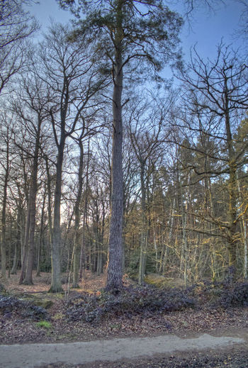 Upright Beauty In Nature Day Forest No People Outdoors Tranquility Tree Tree Trunk WoodLand