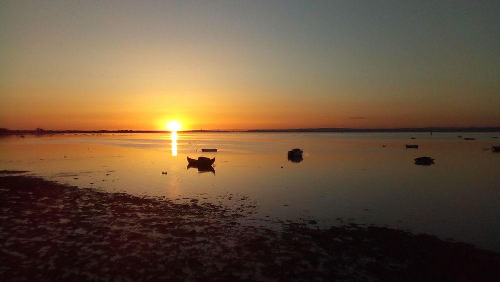 #Alcochete EyeEm Selects Water Swimming Sea Sunset Beach Clear Sky Sand Low Tide Silhouette Sun