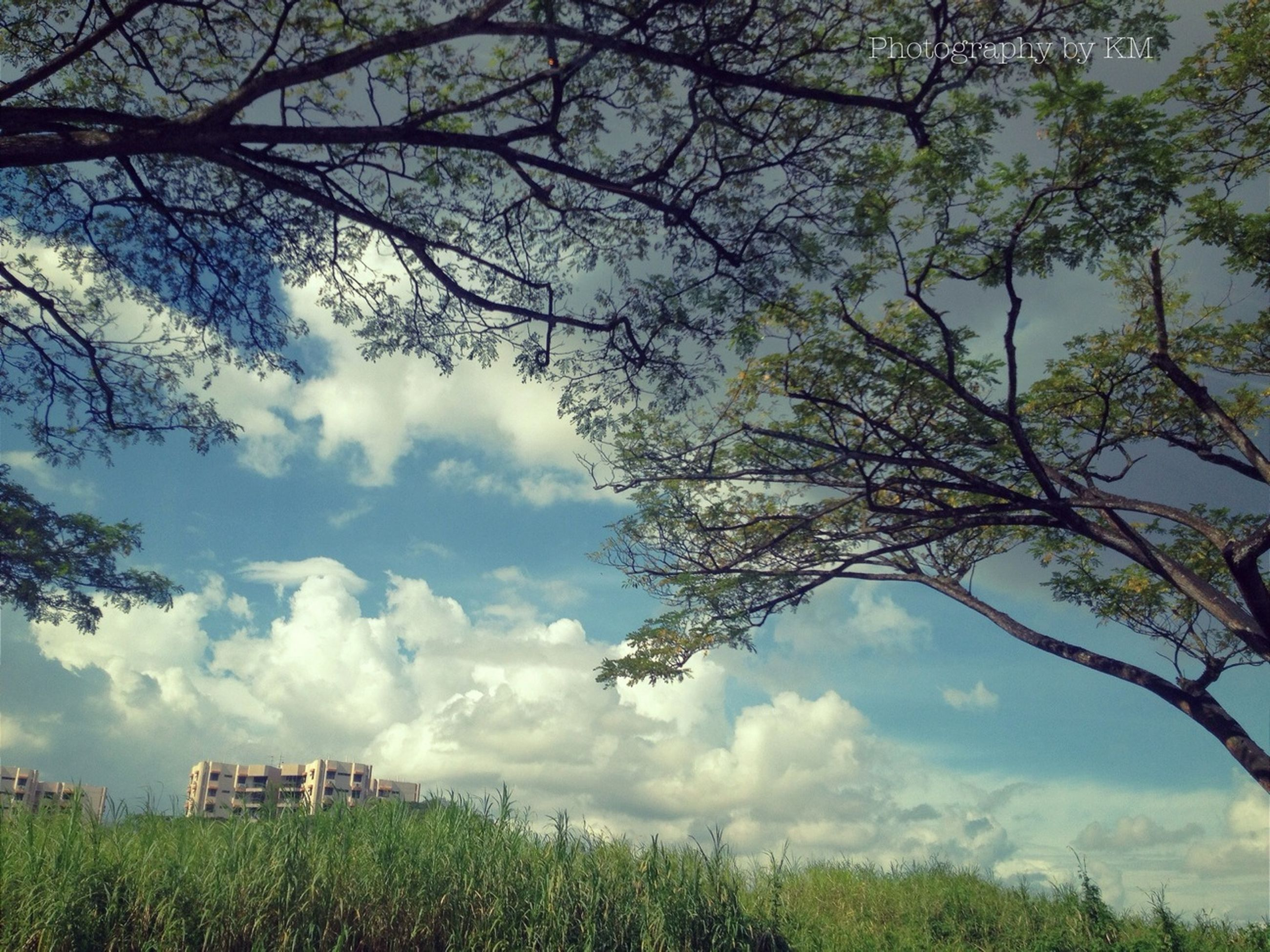 tree, sky, cloud - sky, building exterior, built structure, architecture, grass, cloudy, branch, field, nature, growth, cloud, tranquility, beauty in nature, bare tree, landscape, day, tranquil scene, house