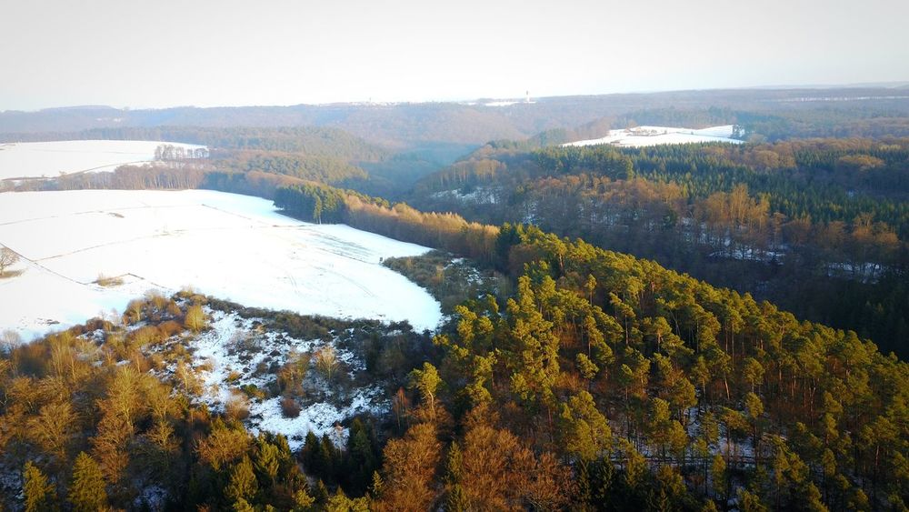 Icy forrest Tree Autumn Nature Beauty In Nature Scenics Tranquil Scene Mountain Tranquility Forest Non-urban Scene Landscape Outdoors Sky Water No People Day WoodLand DJI Mavic Pro Luxembourg Landscape_Collection Beaufort  Beauty In Nature