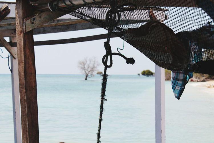 EyeEm Selects Water Tree Sea Beach Hanging Sky Close-up