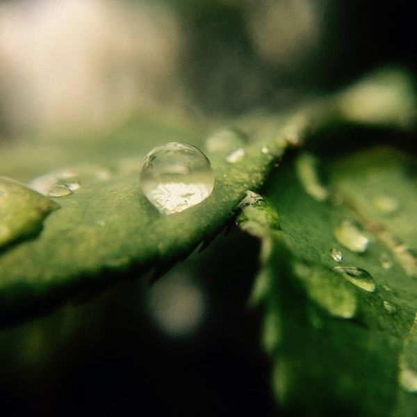 H²O. Nature Wet Close-up Water Drop Leaf Environment Green Color No People Growth Plant Beauty In Nature Dew Freshness RainDrop Outdoors Day Beauty In Nature EyeEmNewHere Canon Photographer (null)Photography
