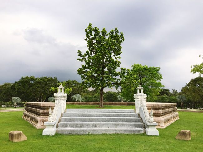 One tree on an overcast day Plant Tree Sky Cloud - Sky Growth Grass Nature Park - Man Made Space Tranquil Scene Bench No People Green Color Tranquility Seat Day Outdoors Beauty In Nature Field Park