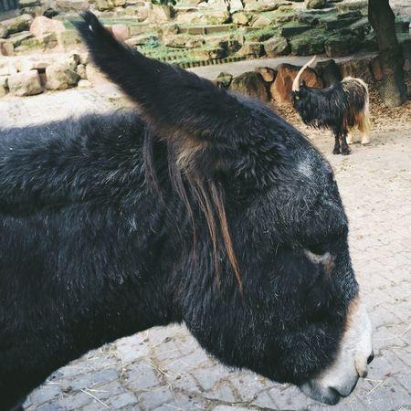 A donkey is a donkey is a donkey is a donkey. Vscocam Animals