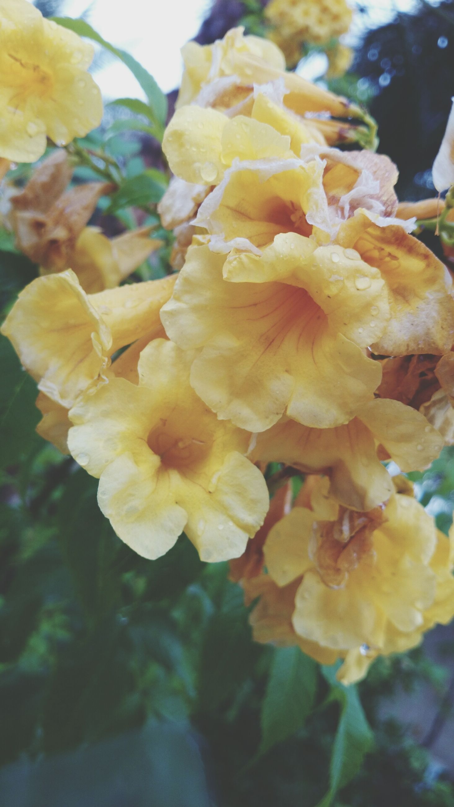 flower, petal, freshness, fragility, flower head, beauty in nature, growth, yellow, close-up, blooming, focus on foreground, nature, plant, in bloom, blossom, day, no people, botany, outdoors, springtime