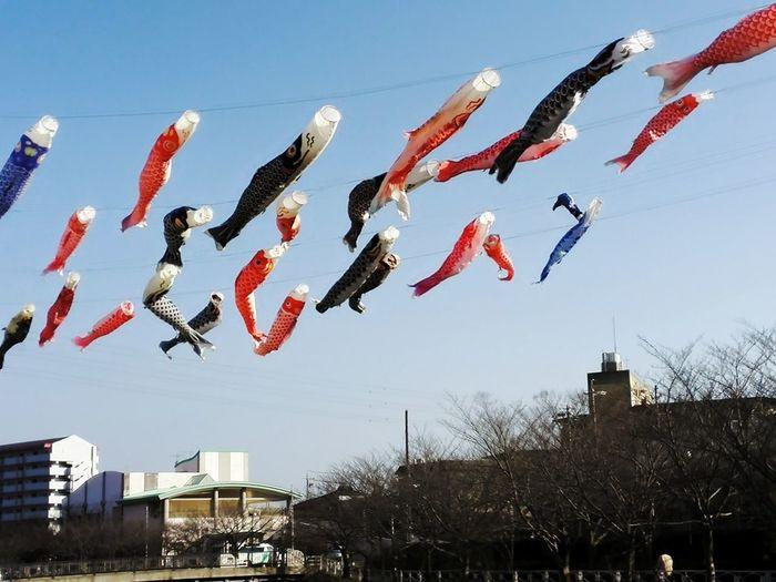 Hamamatsuri Festival Kite Sun Sky Amazing