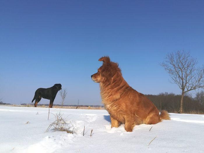 Dog on snow against clear sky