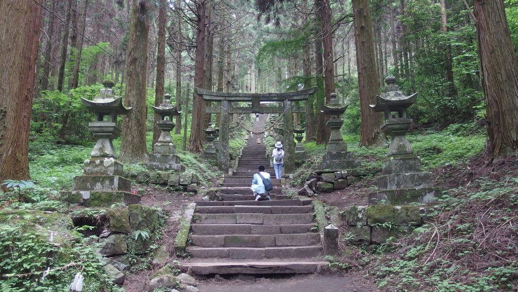 Japan 熊本県 上色見熊野座神社 Tree Full Length Forest Child Men Steps Walking Steps And Staircases