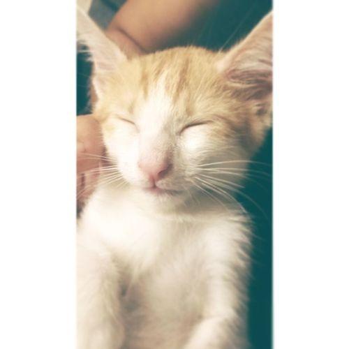 今天又當乾媽了!取名叫楽(らく)唷! (๑•̀ㅂ•́)و✧ 這張看著還滿像辛巴的!哈哈 らく 楽 Cat Sinba Baby Babycat