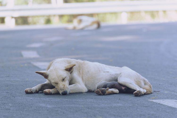 View of a dog sleeping on street