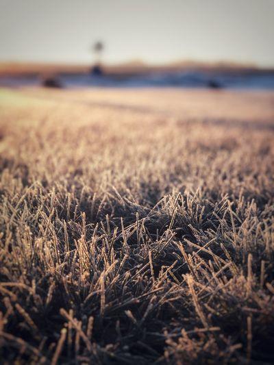 Frost Sky Land