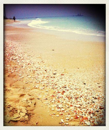 Sea And Sky Seashells Lovely Weather Beach Walk