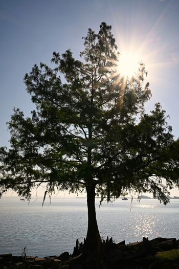 Silhouette tree by sea against sky