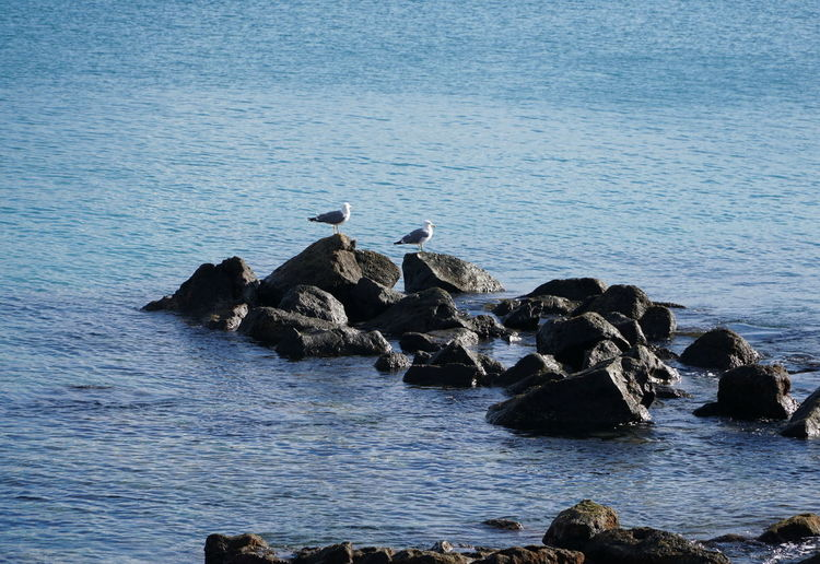 seagulls Water Sea Rock Bird Animal Wildlife Animal Themes Animals In The Wild Animal Rock - Object Group Of Animals Solid Vertebrate Beauty In Nature Nature Day Waterfront No People Scenics - Nature Rock Formation Outdoors Seagull Rocky Coastline Marine Hungry Seagulls