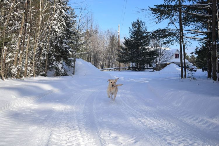 Dog on snow covered trees against sky