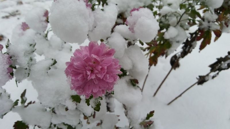 Flower Time Botany Outdoors Pink Color Winter