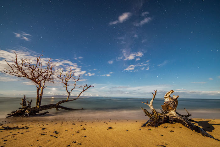 Maui beach at night. Hawaii Maui Astrophotography Bare Tree Beach Beauty In Nature Branch Landscape Lone Maui Hawaii Moonlit Moonlit Night Nature No People Outdoors Scenics Sky Stars Tranquil Scene Tranquility Tree Tree Trunk