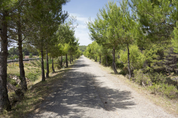 Barracas Beauty In Nature Castellón Day Forest Grass Growth Landscape Nature No People Outdoors Road Scenics Sky The Way Forward Tranquil Scene Tranquility Tree