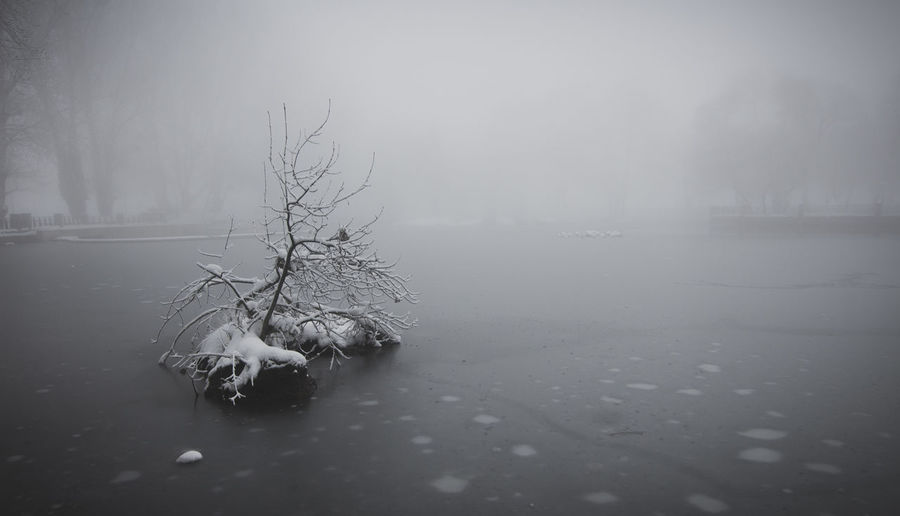 Winter wonderland Day Focus On Foreground Fog Nature Nature No People Outdoors Snow