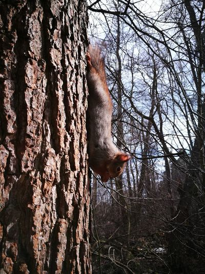 Kotka, Finland Squirrel HuaweiP9 Furry Friend