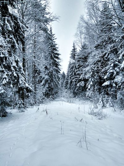 No People Tree Snow Winter Cold Temperature Nature Landscape Outdoors Day Sky Russia EyeEmNewHere