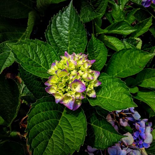 Leaf Flower Green Color Beauty In Nature Nature Plant Petal Fragility Flower Head Freshness Purple Close-up Growth Day Outdoors No People