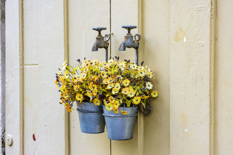 Close-up of potted plant with flowers against white wall